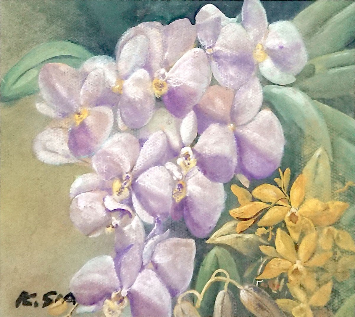 Purple & Yellow Orchid by Khaw Sia