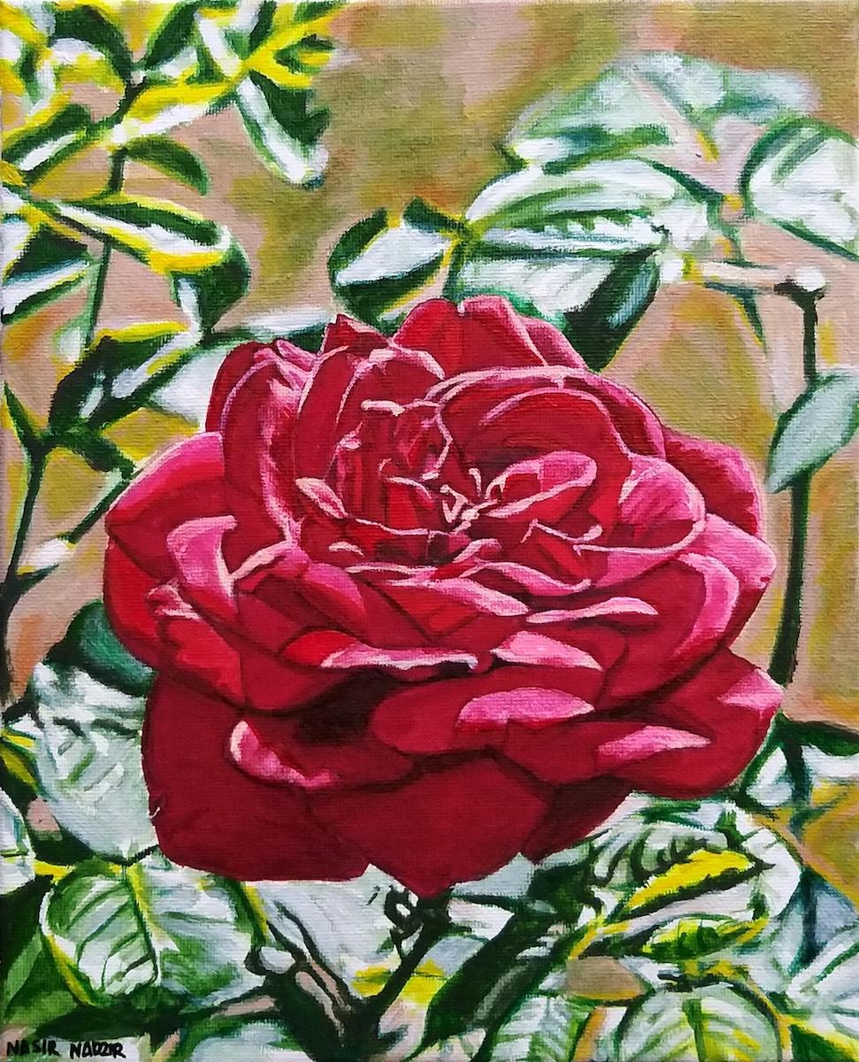Rose by Nasir Nadzir